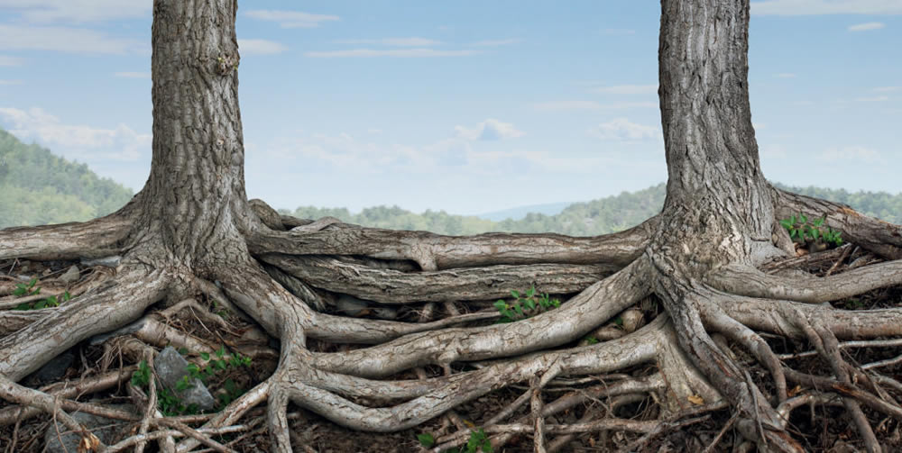 trees with roots growing together