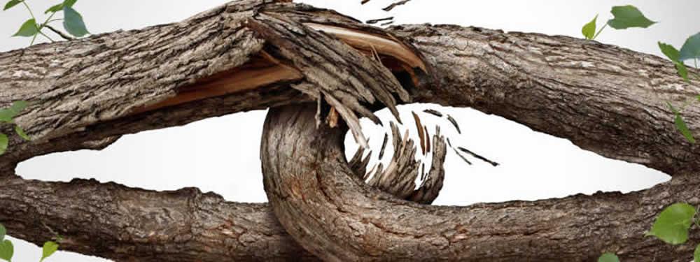 branch breaking